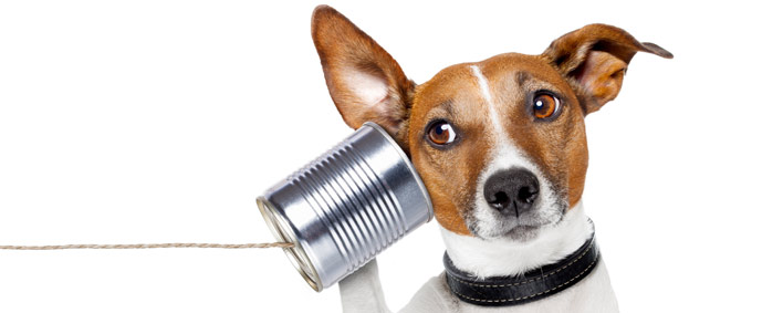 Dog-with-tin-can-phone-708x283.jpg
