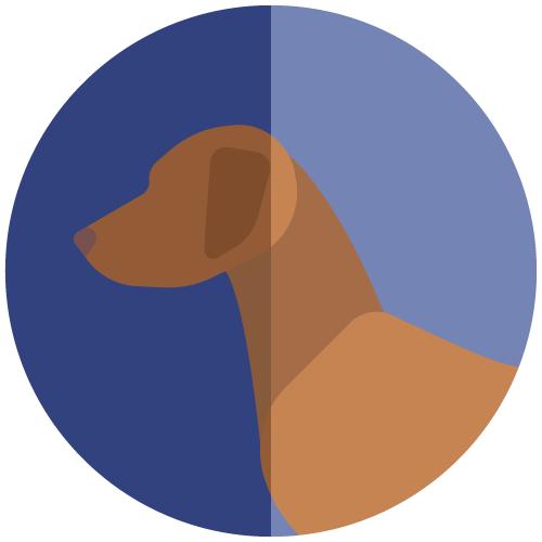 avatar-viszla